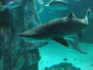 Webcam Londra  Webcam London Acquarium